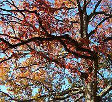 Oak by dge357