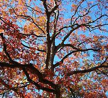 Oak 2 by dge357