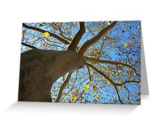 Sycamore Tree Greeting Card
