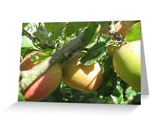 Apple harvest Greeting Card