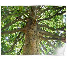Magnolia Tree 3 Poster