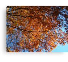 Firetree Canvas Print