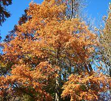 Firetree 2 by dge357