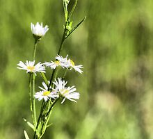 Flower 128 by Richard Burton