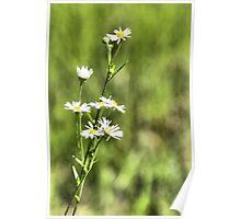 Flower 128 Poster