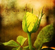Yellow Bud by Katayoonphotos