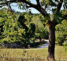 A Country Road by Eileen Brymer