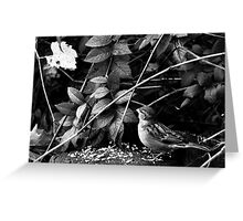 Bird in the Park Greeting Card