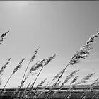 a windy day by mortonboy