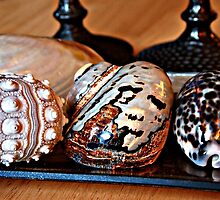 Shells and Candlesticks by littlelin