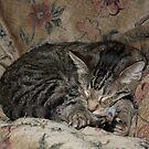 Cat Nap by Lisa Holmgreen