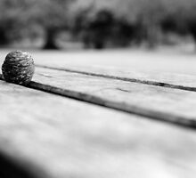 Bench in Visitor Centre, Phoenix Park by Dave  Kennedy