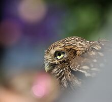 Little owl, freedom is colorful! by Rachele Totaro