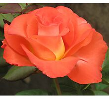 Perfect Fall Rose Photographic Print