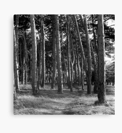 Cluster Of Trees, Phoenix Park Canvas Print