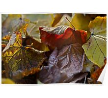 5 ★★★★★ . Fabulous , just wonderful and fabulous ! I do LOVE you AUTUMN . by Brown Sugar . Views (144) favorited by (3) thank you ! Poster