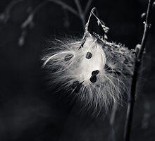 Fuzzy. by Sharlene Rens