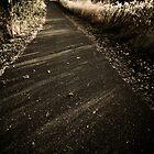 Autumn Pathway by Sharlene Rens