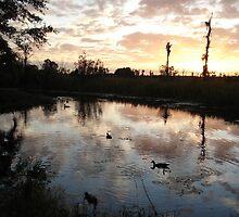 SUNSET WITH MUSCOVIES (ECONFINA CREEK, FL) by May Lattanzio
