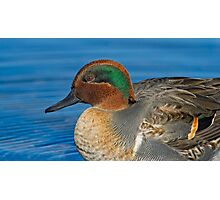 Green winged teal profile  Photographic Print