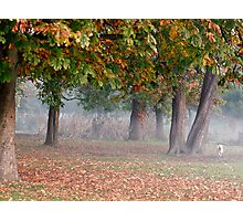 Freddie in a misty park Photographic Print