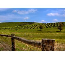 Nepenthe Vineyards - Hahndorf - Balhannah, The Adelaide Hills, SA Photographic Print
