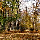 More Fall Trees by Shulie1