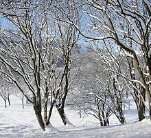 Cwm in snow by Jane Corey