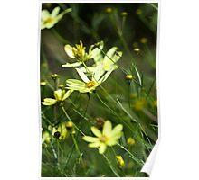 Wild Yellow Poster