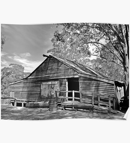 The Shearing Shed. Poster