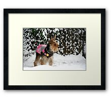 Dog in the Snow Framed Print