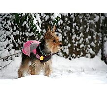 Dog in the Snow Photographic Print