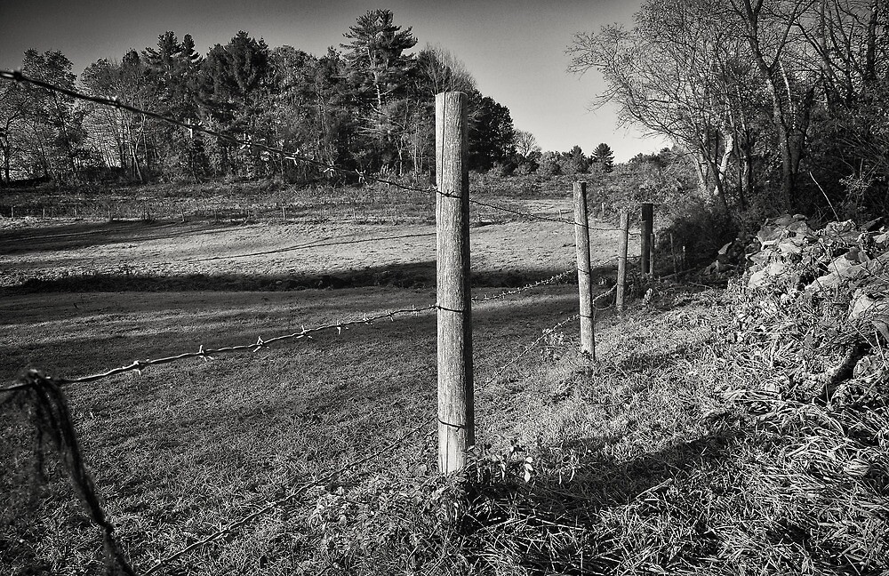 The Fence Line  by John  Kapusta