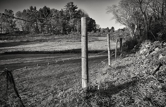 The Fence Line  by John  Kapusta