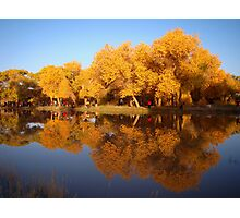 Reflection of Golden Poplar Trees in a Lake Photographic Print