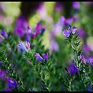 Wild Flowers!  by Anna Ryan