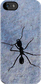 Ant in wilderness by Garry Andrews