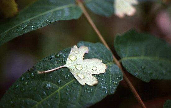 Leaf on Leaf by Phil Campus