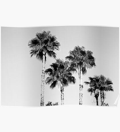 sky high palms Poster