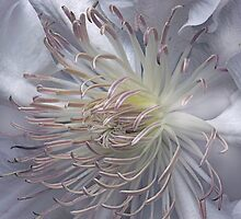 The White Clematis by EbyArts