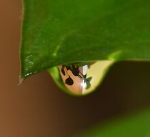 A Drop of Leaves by Eileen Aquiningoc  Schwake