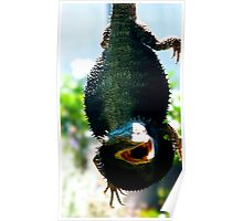 Daddy Bearded Dragon  Poster