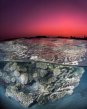 Sunset Over the Red Sea Reef by Henry Jager