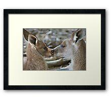 A kiss for Mum Framed Print