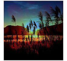 Sugarcane Sunset Photographic Print