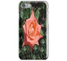 Orange Rose... iPhone Case/Skin