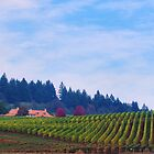 Yamhill County Vineyard  by Don Siebel