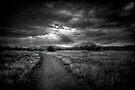 Cold Sun by Bob Larson