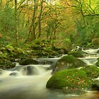 The Dewer's Steps by phil hemsley