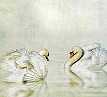 Swans Courting in the mist by Tarrby